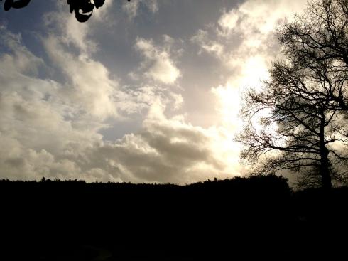 Exact een jaar geleden was het ook een mega storm. Toen is onze grote eucalyptus boom omgewaaid. Ik ben vandaag toch al een paar keer gaan kijken naar ons dak en de eeuwenoude eiken met een bang hartje !