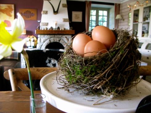 Heel stilletjes was het hier vanochtend, de gasten sliepen nog lekker zacht toen ik 'mijn' tour deed. Ik ga 's morgens kruiden plukken voor onze eitjes bij het ontbijt. Dan ga ik de beestenboel eten geven en toen viel mijn oog op dit intacte vogelnestje. Het dient nu als paasdecoratie !