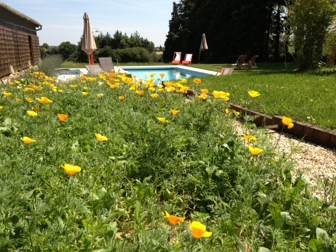 De bloemen rond ons zwembad zijn uitgekomen ! Onze gasten genieten met volle teugen van onze nieuwe aanwinst voor en na hun uitstapjes in Bretagne. Vanavond weer buiten diner, zalig zomerweer !