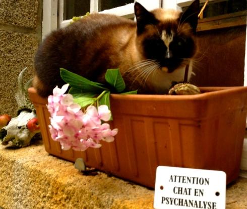 Opgepast voor de kat, ze is in therapie :) !