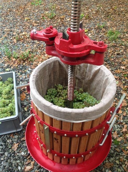 20 kg druiven door de pers draaien