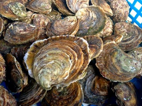 Heeeele grote platte oesters van Cancale