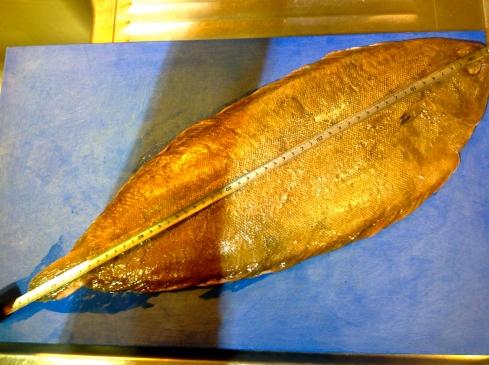 Mooie tong van ons Bretoense kusten : 53 cm, 1,2kg ! Bon appétit !