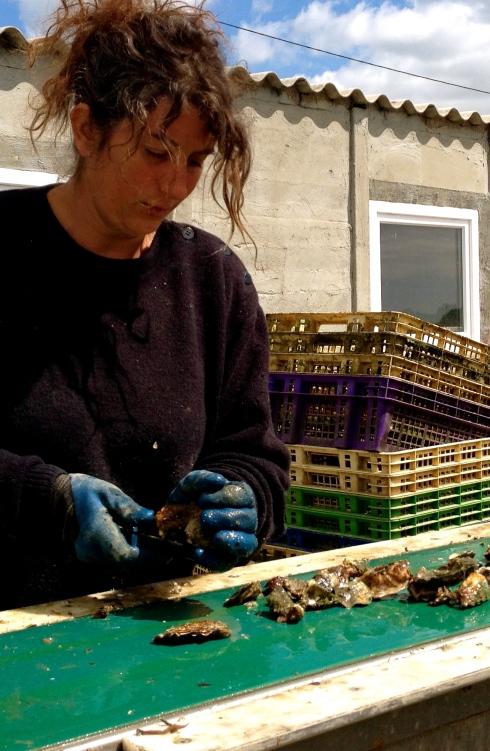 Er wordt naarstig gewerkt op de oesterparken in deze periode. Jonge oesters worden uitgezet in de Golfe du Morbihan. Ze worden getrieerd volgens grootte en gewicht. In nieuwe poches gestopt zodat ze weer vers plankton kunnen eten. Handarbeid en zwoegwerk, en dat allemaal opdat wij er lekker van kunnen smullen !
