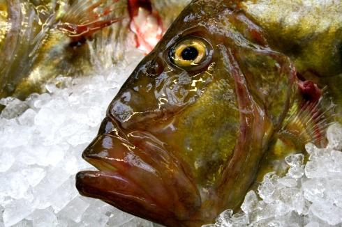 heerlijke zonnevis, St Pierre, op het menu, geserveerd met een St Véran, zalige wijn die heel goed samengaat met deze bijzondere vis.