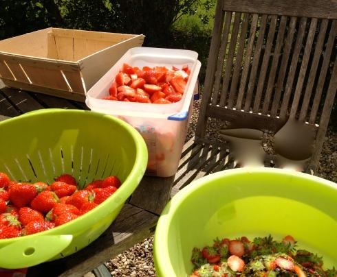 """Tuinklusje"" : aardbeien kuisen in de tuin in het zonnetje :) !"