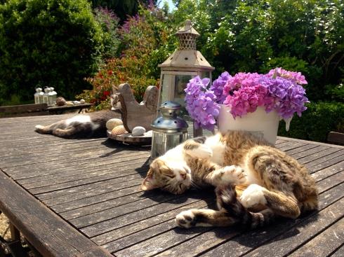 Terwijl onze gasten fietsen, Bretagne bezoeken, zwemmen in ons zwembad, wandelen op het eiland Arz, zitten onze luie katten absoluut niets te doen. Zonnen ja !