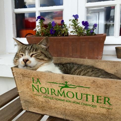 Hou je mailbox in de gaten, onze zondagse mailing komt eraan ! Goede morgen uit Bretagne ! Anouck vanuit www.lamaisonblancheauxvoletsbleus.com