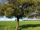 bos van Lannouée